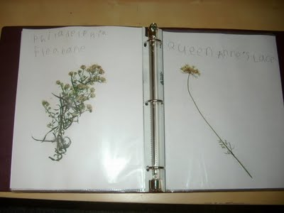 wildflowerbook2