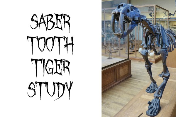 Saber Tooth Tiger Study