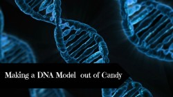 Making a DNA Model out of Candy