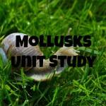 Mollusks Study – Part 2 of our Invertebrates Study