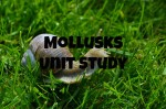 Mollusks Study – Part 2 of our Invertebrates Study