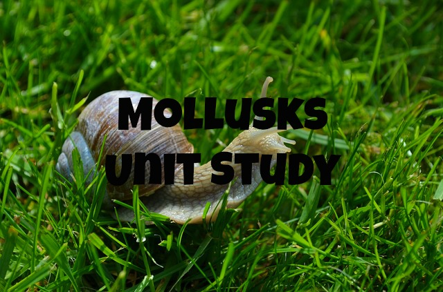 Mollusks Unit Study