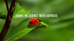 Hands on science with ladybugs