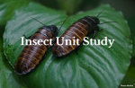 Insect Unit Study