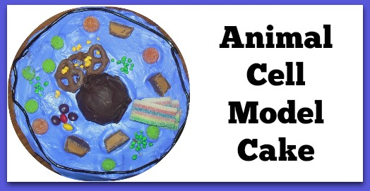 animalcellmodel