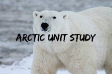 Arctic Unit Study