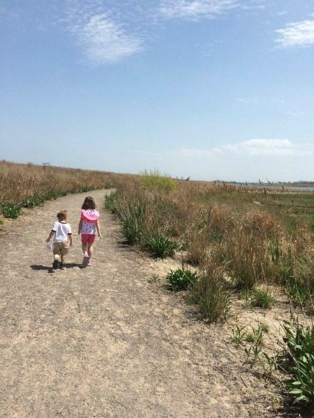 We also have a local Salt Marsh and nature trail